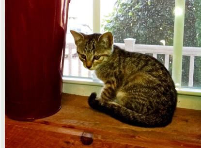 Nickel Plate Mills Erie Pa Cat Food Amp Supplies