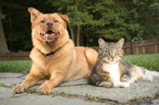 Healthy dogs and cats eat holistic pet foods.